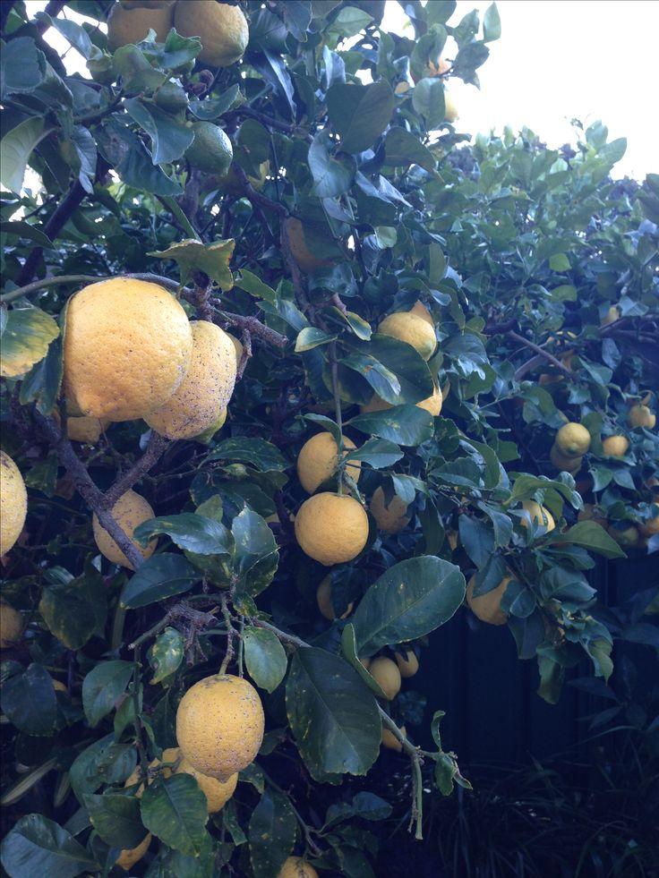 June 2017. Bye lemon tree.