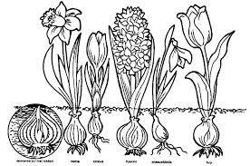 bloembollen >> welke bloemen?