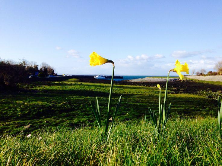 Springtime in the #Burren.