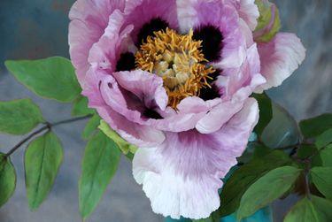 pioen rose