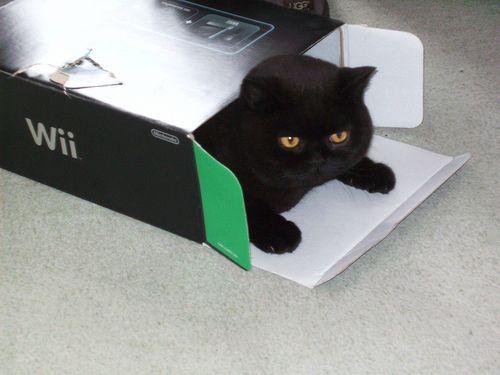 A Wii Cat [2009]