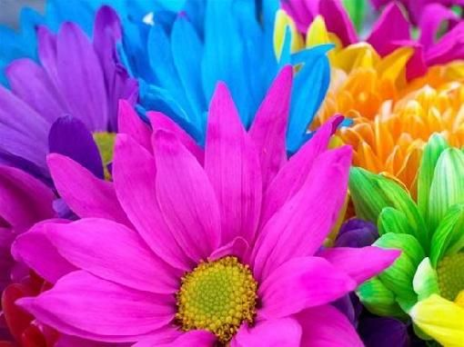 Ever wonder what gives flowers their color??