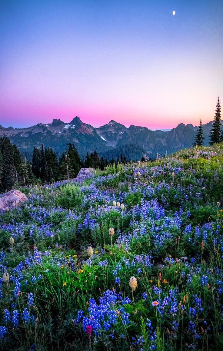 Spent sunset up at Mt Rainier- it is by far one of the most enchanting places I've ever visited! [2500 x 3938] - #nature #photography Beautiful Places To Visit, Beautiful World, Places To See, Cool Pictures, Cool Photos, Geocaching, Nature Photos, Nature Images, Landscape Photographers