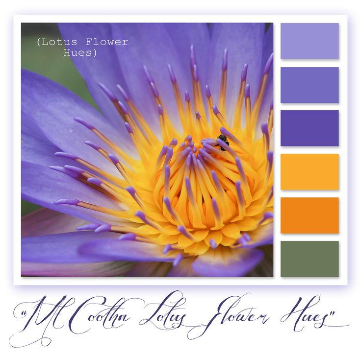 Lotus Flower - Mt Cootha Botanical Gardens, Brisbane Queensland - Australia