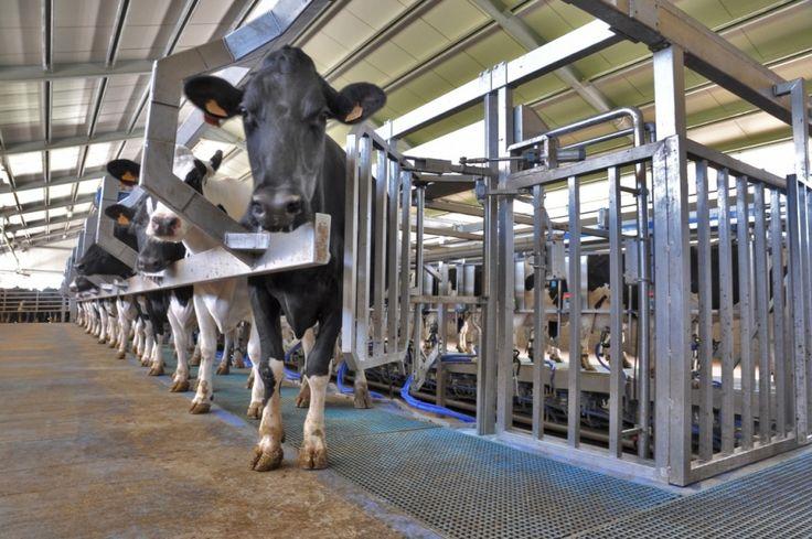Braccio di ferro tra Milano e Roma sulla questione latte