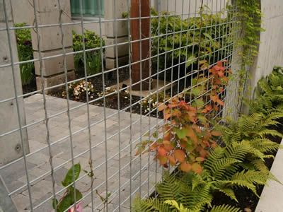 A stainless steel welded mesh panel and wall divide a place into two, some plants are climbing along the panel.