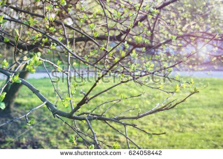 Fresh green tree leaves. Natural background.