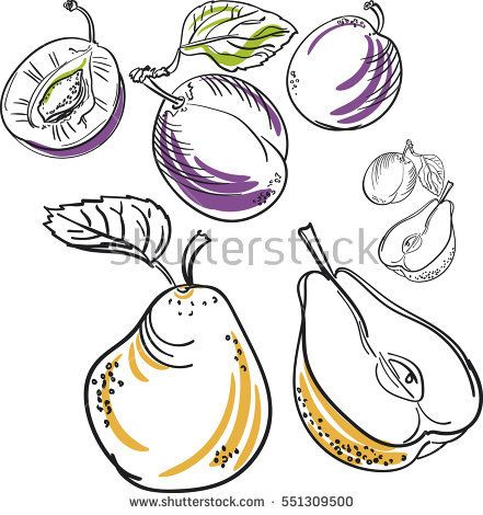 Hand drawn vector illustration of pear and plum. Vector isolate element
