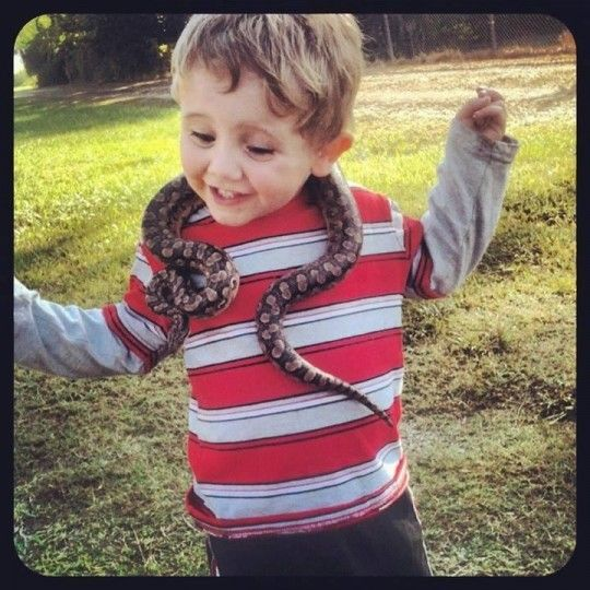... Charlotte Reptile and Exotic Animal Show Concord, NC #Kids #Events