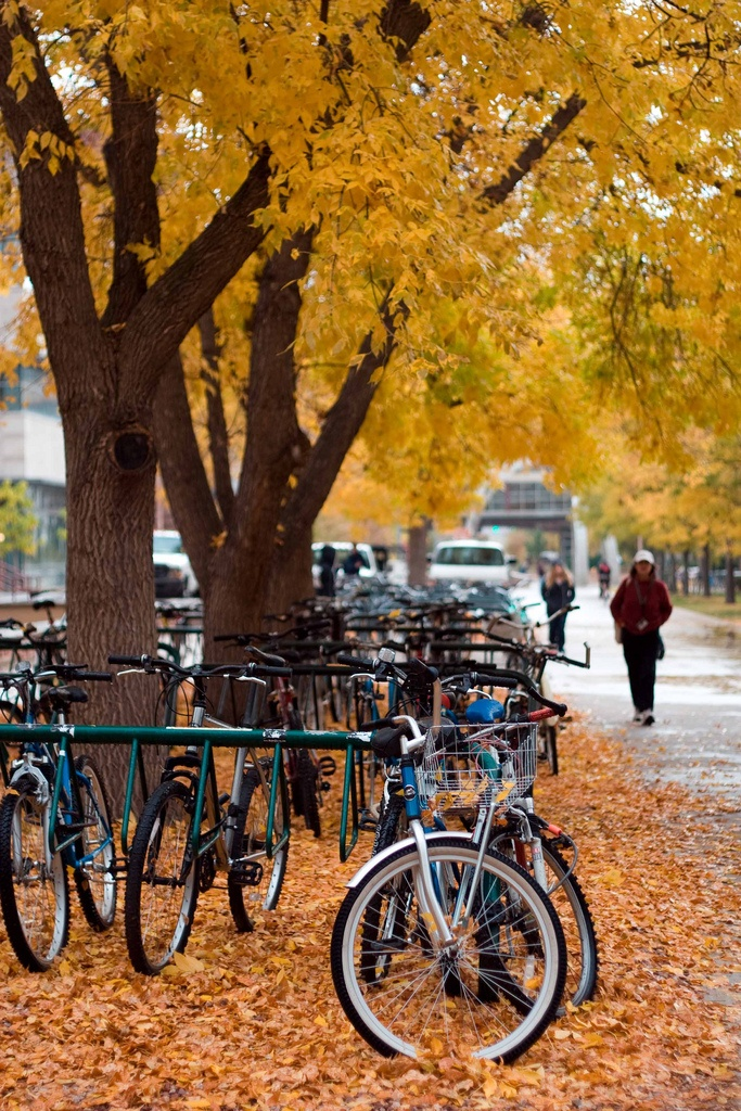 Fall at Colorado State University - Fort Collins, CO