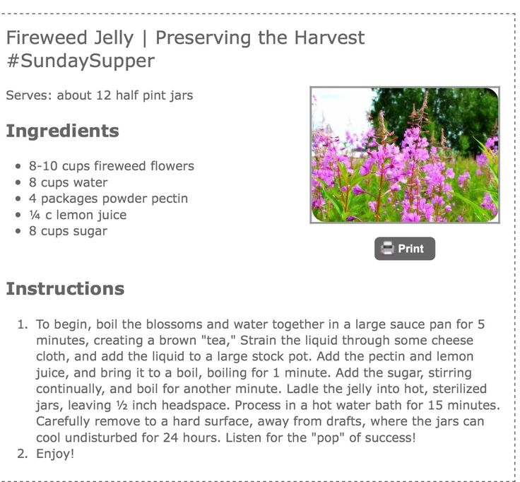 Fireweed jelly                                                       …