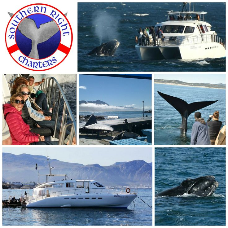 Southern Right Charters Address: New Harbour, Westcliff Road, Hermanus Phone +27 82 353 0550 Email: info@southernrightcharters.co.za