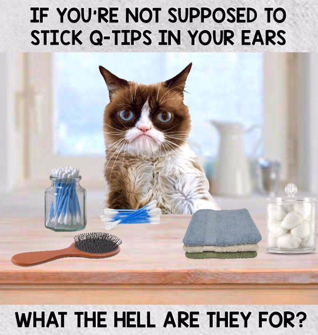 What Can You Hear Me Now Grumpy Cat Kitty Humor Inappropriate