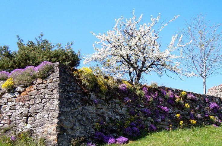 Arbres et murs fleuris. Il me semble naturel qu'on soit heureux en regardant cela.