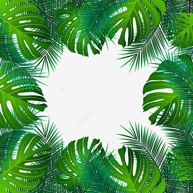 Beautiful Summer Palm Leaves Transparent Background Palm Vector Tree Png And Vector With Transparent Background For Free Download Leaf Background Palm Background Leaves Illustration