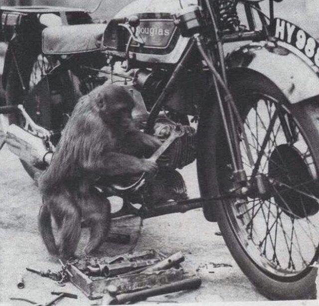 299b2785692f03973125079950312077--motorcycle-mechanic-monkey-business - Show Posts - hubag bohol