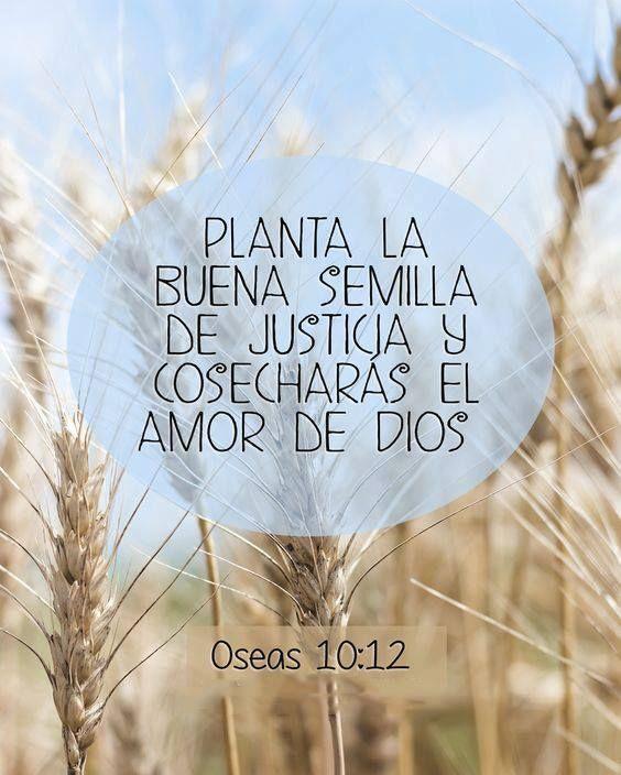 << Planta la buena semilla de justicia y cosecharás el amor de Dios >>.   Oseas 10:12