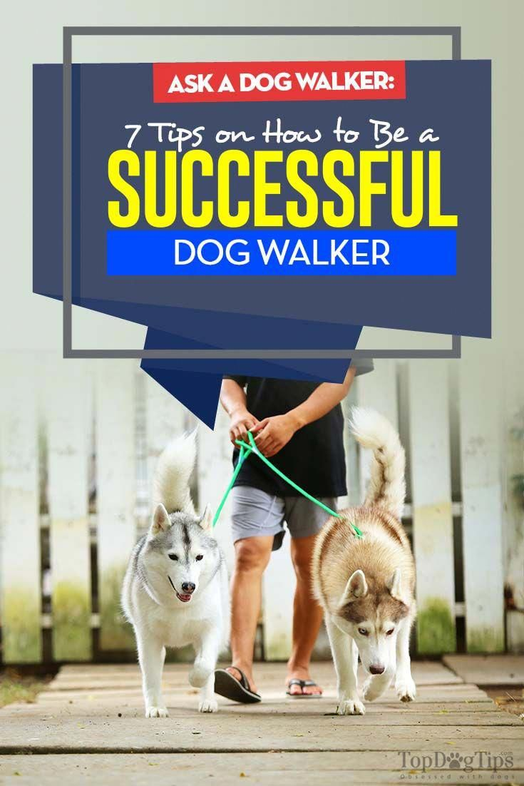 Maybe You Are A Student And Need A Part Time Job Maybe You Just Need A Little Extra Income In Addition To Your Mai Dog Walking Business Dog Walker Dog Walking