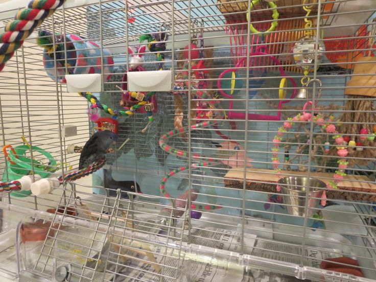 Hagen Vision Bird Cage - Talk Budgies Forums