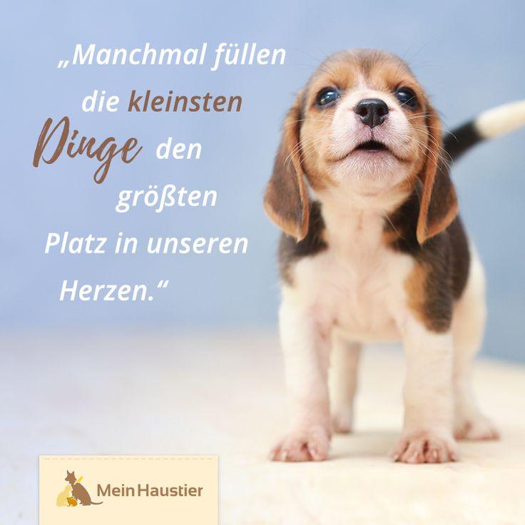 Wie könnte das Herz beim Anblick eines kleines Hundes nicht erweichen…? #mein…