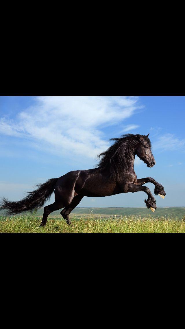 Los animales en libertad viven Agusto   mejor y sanos