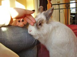 How to build trust and tame a rabbit