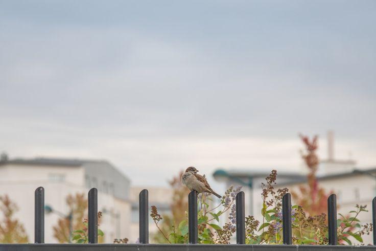 Brown Small Beaked Bird on Fence  Free Stock Photo