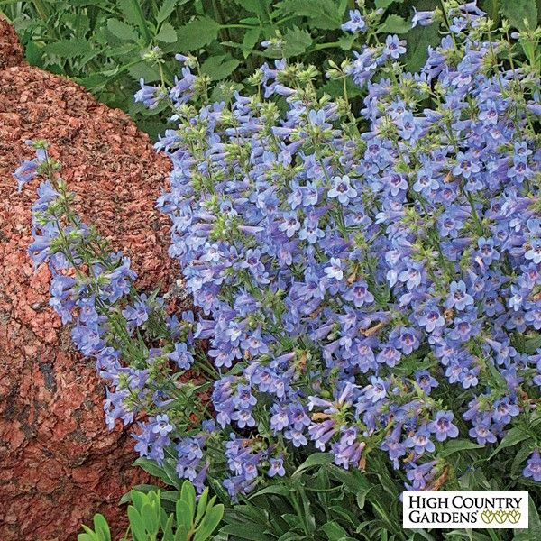 208 Best Yard And Garden Low Water Garden Images On Pinterest Native Gardens Water Features