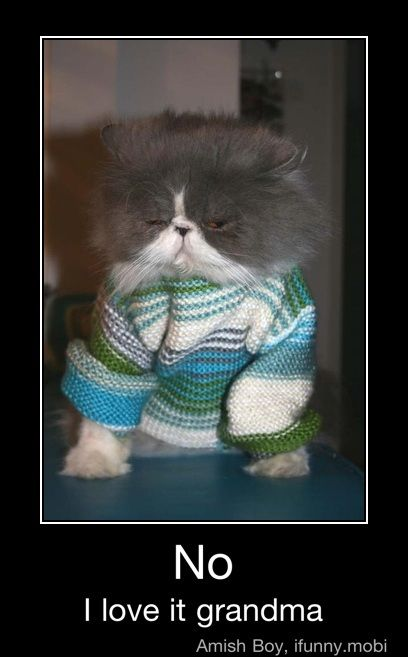 Yes Grandma I LOVE IT: Animal Pics, Grumpy Kitty, Funny Pictures, Funny Animal Photo, Christmas, Funnycat, Funny Cat Pics, Cat Sweaters, Grumpy Cat