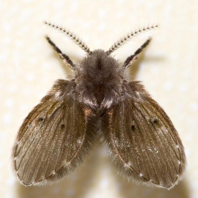 My moth-fly photo appearing on an article about pest control :)
