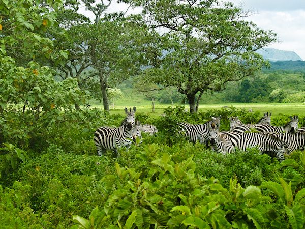16 Things To Do In Arusha, Tanzania. This needs to be on your Safari Bucket List. http://bit.ly/1FUOyei