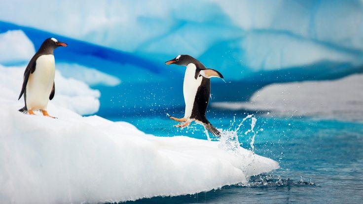 1600x900 Penguin Pictures Browser Themes & Desktop Photo