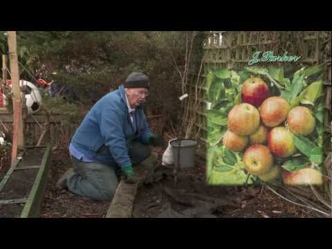 How to grow Apple fruit trees: Jeff's video guide to planting Apple trees - YouTube