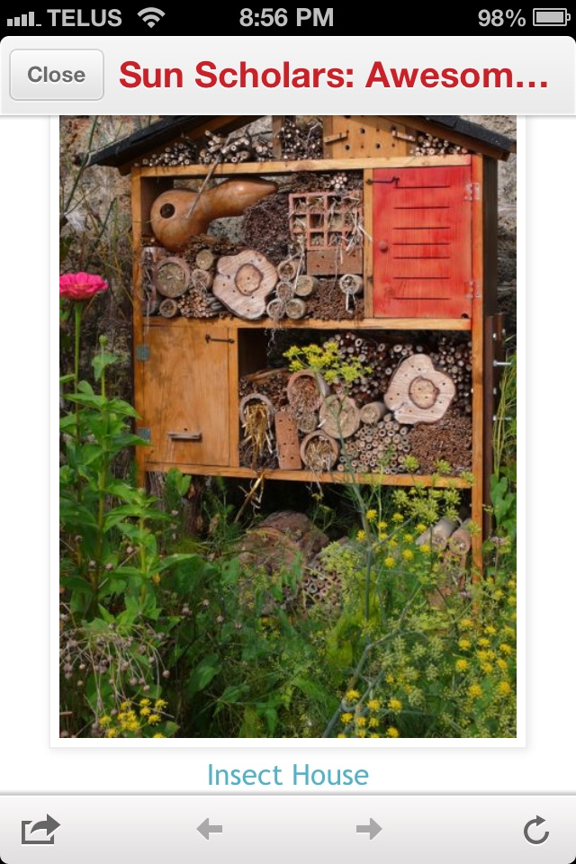Bug house kid stuff pinterest bug hotel gardens and Make your own toad house