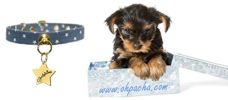 Le collier pour chien Galactée avec sa laisse assortie vous invite au voyage. Il est disponible pour les petits chiens dès 13 cm de tour de cou, de quoi ravir les propriétaires de chiots et Chihuahuas. A retrouver dans notre boutique en ligne : http://www.ohpacha.com/collier-chien/780-collier-pour-chiot-chihuahua.html