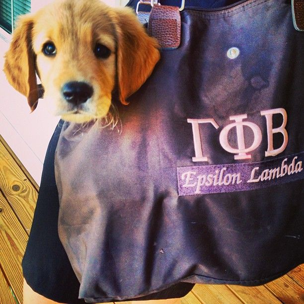 Puppy Phi Beta-that bag is definitely from my collegiate chapter!  And the puppy is beyond precious!