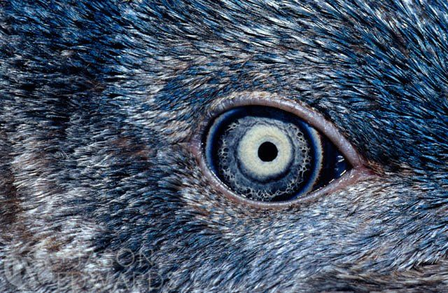 This is Jason Edwards photo of a birds eye, this one stood out when I was looking at his photo gallery