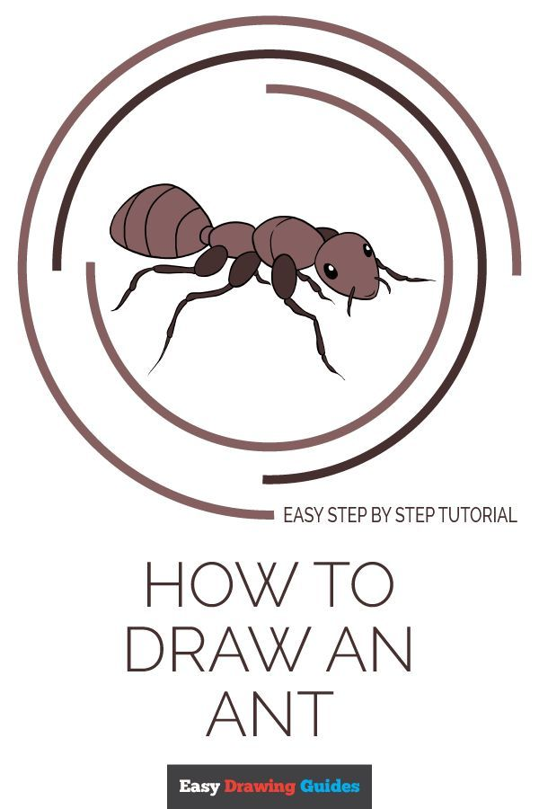 How To Draw An Ant Really Easy Drawing Tutoria Easy Draw Animal