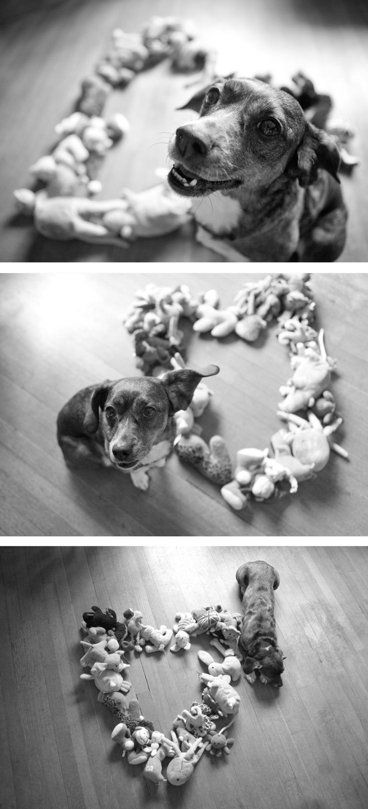 this is a cute photo idea, might have to do this with cutter