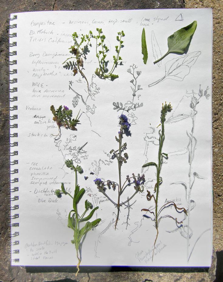 A garden sketchbook...