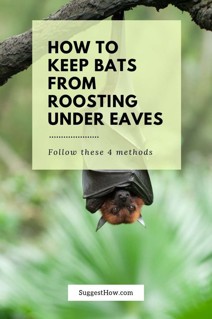 How to keep bats from roosting under eaves getting rid