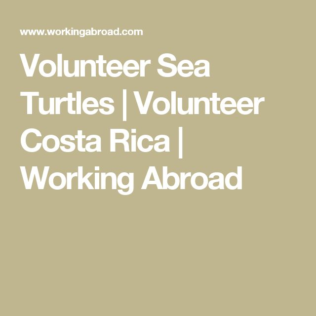 Volunteer Sea Turtles | Volunteer Costa Rica | Working Abroad