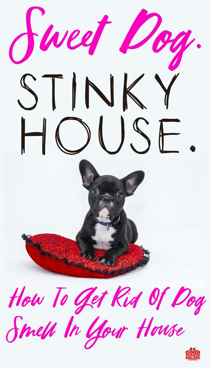 How To Get Rid Of Dog Smell In The House Dog Smells Fluffy Dogs