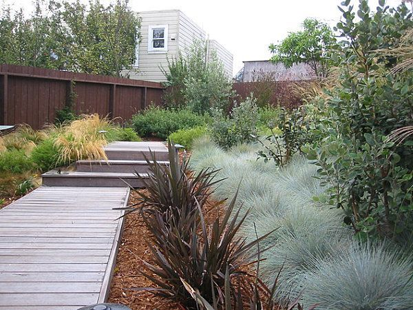 Modern landscaping with native plants