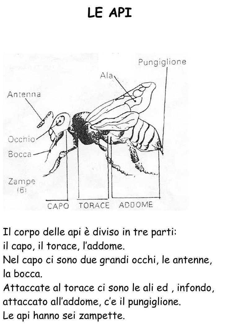 LIBRETTO VITA DELLE API IC Da Vinci S PRIMARIA ROTONDA-03.jpg