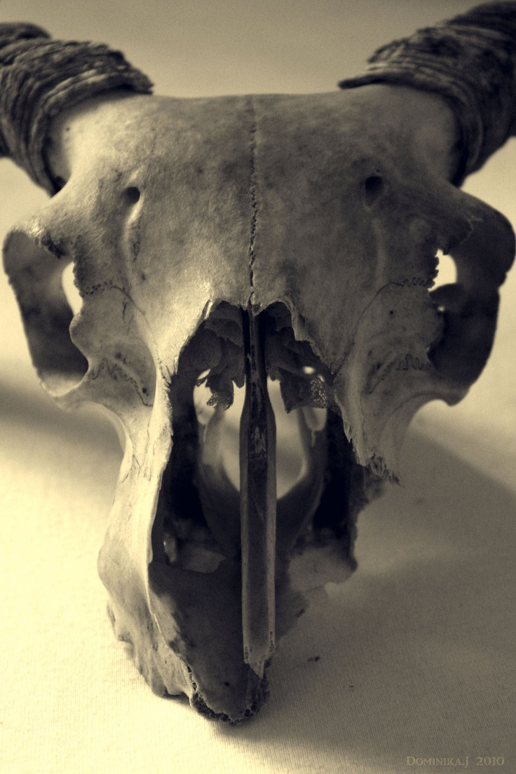 Perhaps my obsession with animal bones makes me creepy... but look how lovely they are.