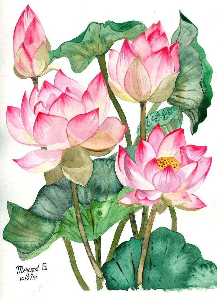 My Lotus Painting Peaceful Lotus Watercolor Painting ดอกบ ว