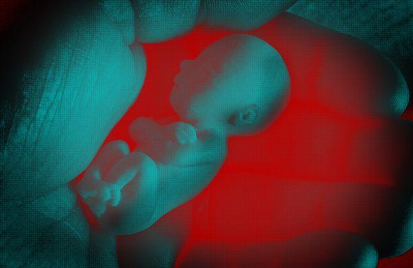 RS Notícias: O embrião do Leviatã: Lei holandesa quer obrigar a...