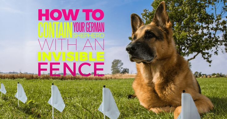Learn about invisible fences for dogs, the challenges of using one with a German Shepherd, and some special tips for training your German Shepherd properly so that the invisible fence is effective. #GSD #DogTraining