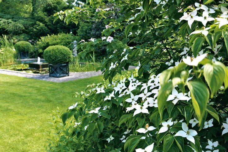 Oltre 25 fantastiche idee su giardini moderni su pinterest for Essere minimalisti